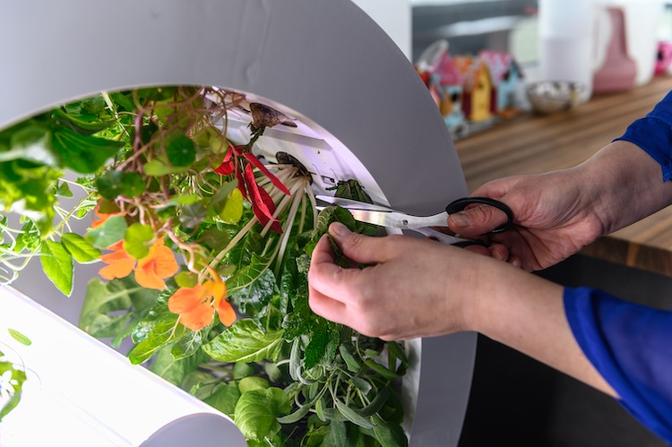 A user removes the plant from the wheel once it is fully grown. Image via OGarden