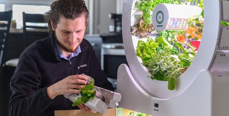 A user placing the seeds into the incubator. Image via OGarden